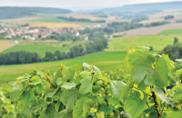 Entreprises Bogny-sur-Meuse - Toutes les Entreprises, Sociétés et PME