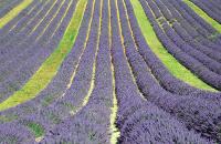 Entreprises, producteurs, fabricants de la région Provence-Alpes-Côtes-d'Azur avec Kompass, l'annuaire mondial des entreprises.